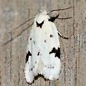 Black-marked Inga Moth - Hodges #1034 - Inga sparsiciliella