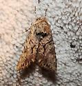 Moth 78