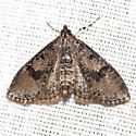 Splendid Palpita Moth - Hodges #5226 - Palpita magniferalis