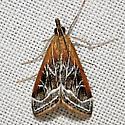 5019 - Pyrausta nexalis