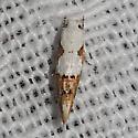Hodges#1434 - Mompha circumscriptella