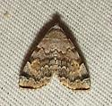 small moth - Idia americalis