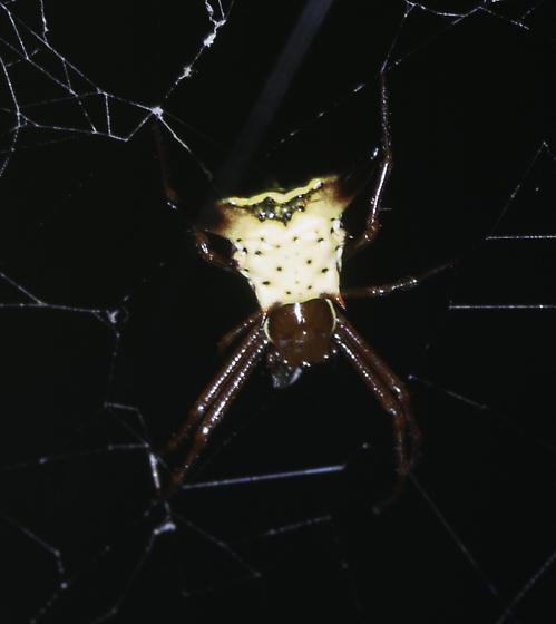 more spiders at Jean's - Micrathena sagittata