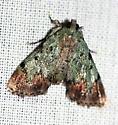 Dimorphic Macalla Moth - Epipaschia superatalis