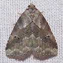 9038 White-lined Graylet - Hyperstrotia villificans