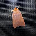 Moth species - Metaxaglaea viatica