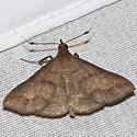 Discolored Renia Moth - Hodges #8381 - Renia discoloralis - male