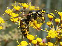A wasp to ID if anyone can help. - Vespula alascensis