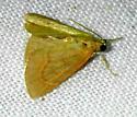 possible Aethiophysa invisalis - Aethiophysa invisalis