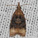 Moth unknown - Platynota flavedana