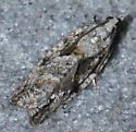 greyish moth - Epinotia nonana