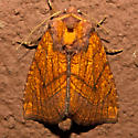 Sensitive Fern Borer - Hodges#9483 - Papaipema inquaesita