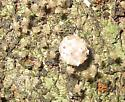 Egg sac with spiderlings