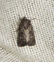 Bristly Cutworm - Hodges #10397 - Lacinipolia renigera