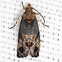 Tulip-tree Leaftier Moth - Hodges #2711 - Paralobesia liriodendrana