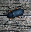 beetle on deck