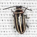 Flea Beetle - Disonycha pensylvanica