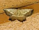 MothEuchlaena_sp05272019_GH - Euchlaena muzaria