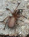 spider040317