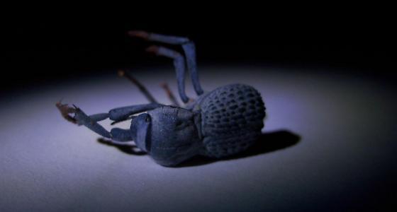 Armored Beetle