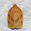 Hodges#3631 - Choristoneura obsoletana