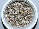 Noctuidae, cocoons - Tripudia rectangula