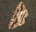 Brown lined Looper - Neoalcis californiaria - male