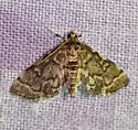 Small moth from Merc vapor light - Anageshna primordialis
