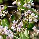 UD Bee 2