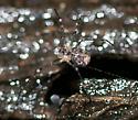 Arachnid in leaf detritus (?)
