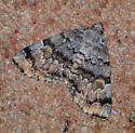 Moth with pale green spots - Idia americalis