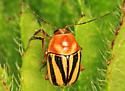 Leaf Beetle? - Cryptocephalus