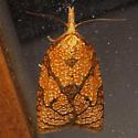 Reticulated Sparganothis Moth  - Hodges #3720 - Cenopis reticulatana