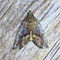 Unknown moth - Lithacodia undescribed