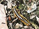 mystery catarpillar
