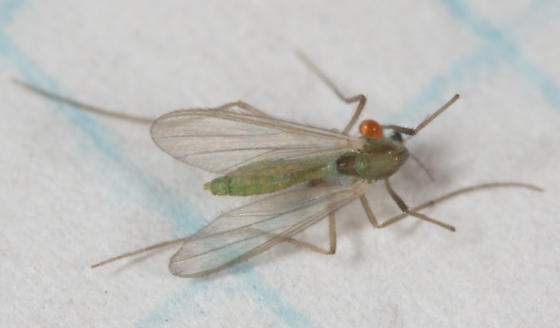 Fly with mite - female