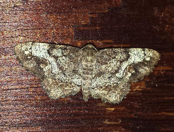 One-spotted Variant Moth? - Hypagyrtis unipunctata