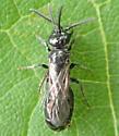 Bees? - Tiphia - male - female