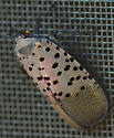 On screen door - Lycorma delicatula