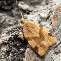 Small Moth - Clepsis peritana