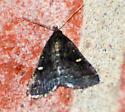 Tiny Dark Moth with Yellow Spots - Tetanolita mynesalis