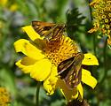 Skippers - but which there are so many similar !