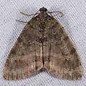 Hydriomena of some kind? - Hydriomena nubilofasciata