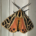 Pretty moth with bold black markings and orange