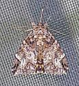 MothLocustUnderwing_sp06012018_SM_ - Euparthenos nubilis