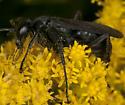 Wasp IMG_4144