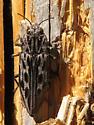 Buprestid? - Chalcophora angulicollis