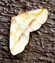 Lemon Plagodis - Plagodis serinaria