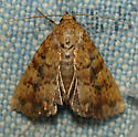 Unknown Moth - Perigea xanthioides