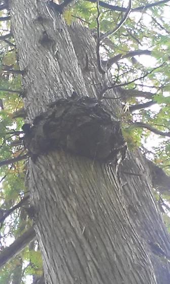 Wasp nest???